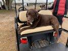 Sailor on Golf Cart - 1.jpeg